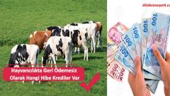 Hayvancılıkta Geri Ödemesiz Olarak Hangi Hibe Krediler Var
