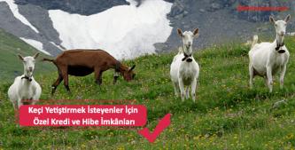 keçi yetiştiriciliği için özel hibe ve kredi imkanları