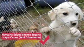 Hayvana Eziyet İşkence Suçuna Hapis Cezası (Yeni Düzenleme)