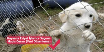 Hayvanlara işkence ve eziyet suçu şikayet